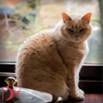 Portretfotografie katten