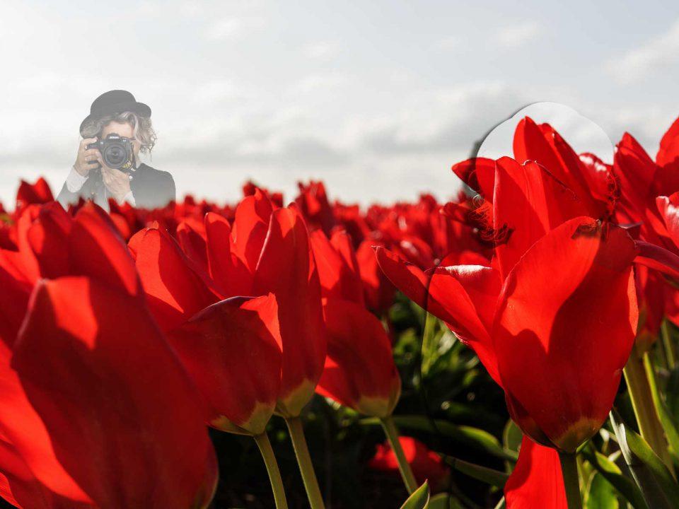 fotografie bloembollenvelden rond de egmonden